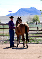 Yavapai College Show ~ Halter and showmanship