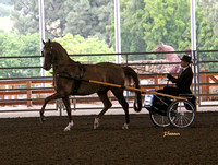 SEAHA Arabian Carriage Driving ~ April 8th